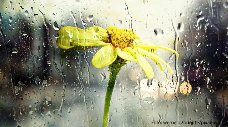 Unwetterschäden: Welche Versicherung zahlt? Bild einer Blume im Regen zum Beitrag auf tippsundrat.de